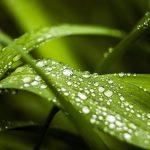Фэн-Шуй: эффекты зеленого цвета