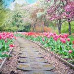 Растения и цветы для хорошего Фэн-Шуй