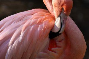 Фэн-Шуй: эффекты розового цвета