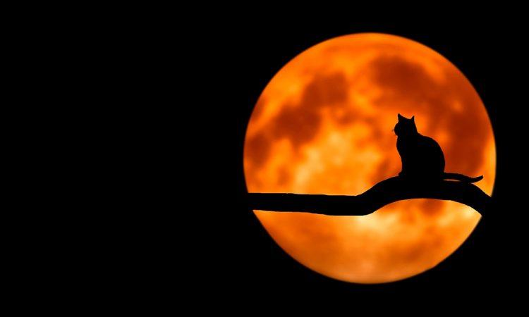 Полная Луна 25 сентября 2018 года для каждого знака Зодиака