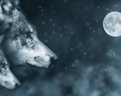 Полная Луна 22 декабря 2018